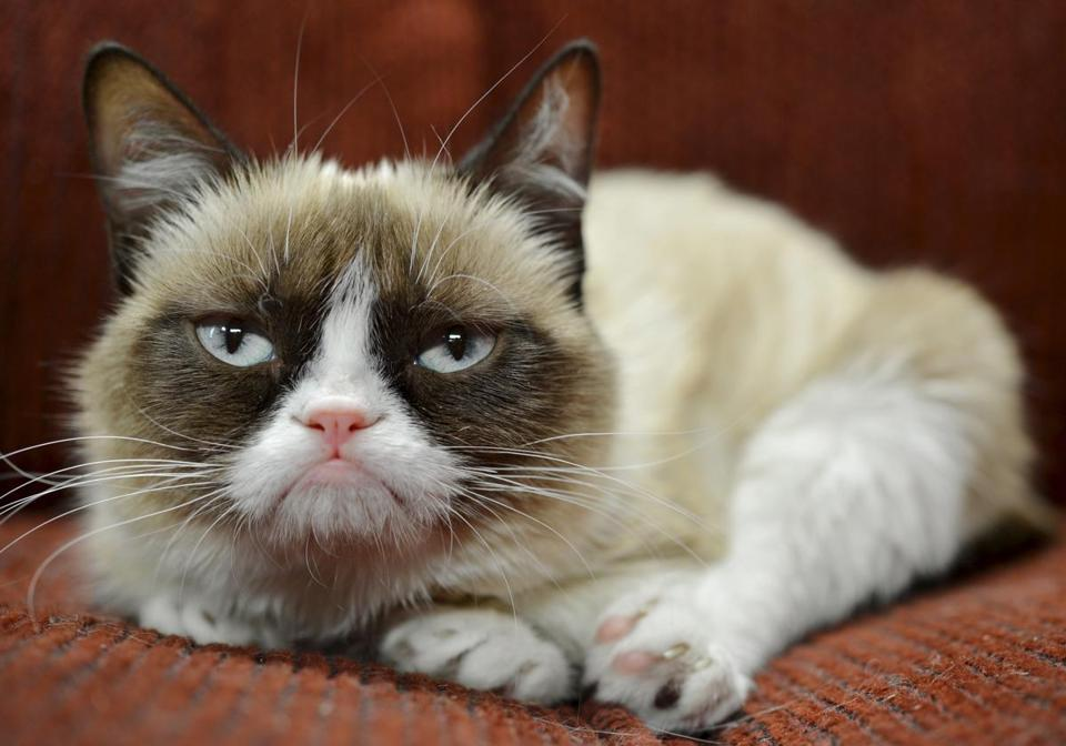 Grumpy Cat Wins $710K Ruling in Copyright Case