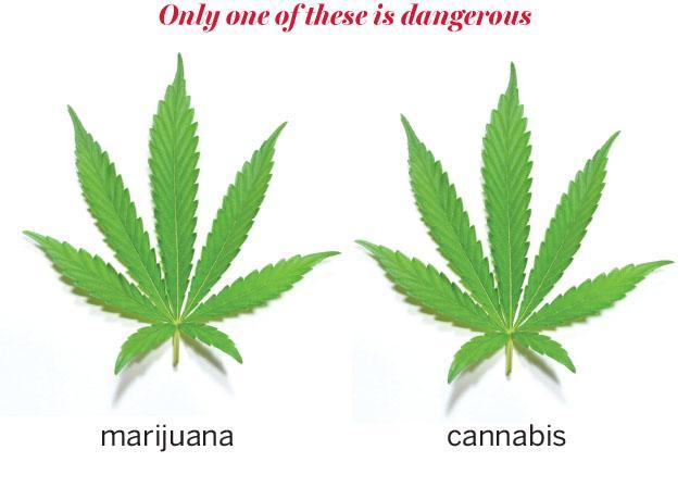 This is your language on cannabis