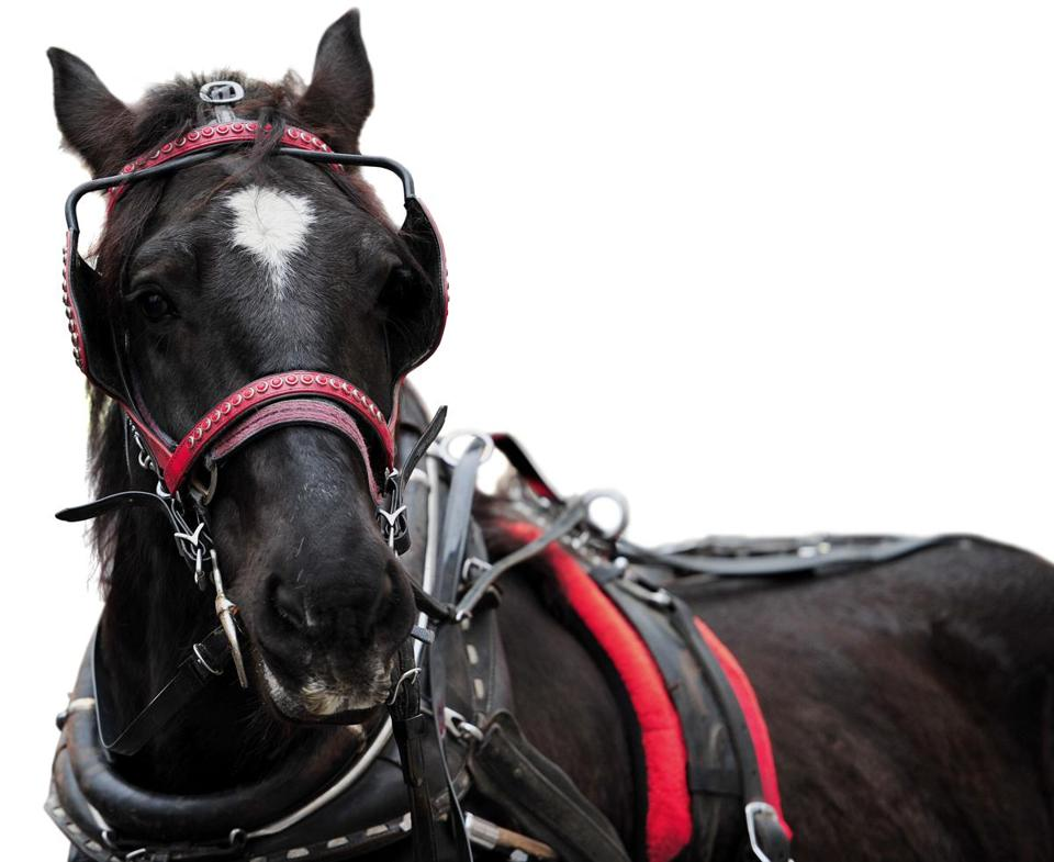 New York mayor Bill de Blasio has proposed replacing carriage horses, like this one near Central Park, with antique cars.