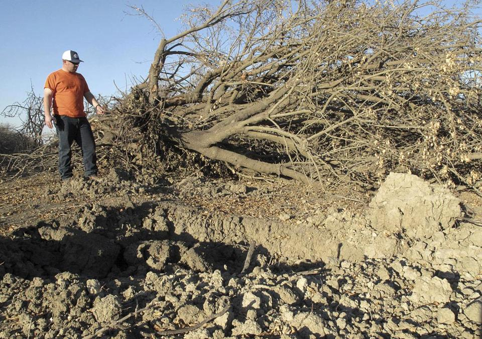 Alan Thompson of G&F Agri Service LLC looked at a tree as he managed a crew of heavy equipment operators that removed an almond orchard at Baker Farming Company in Firebaugh, Calif., earlier this month.