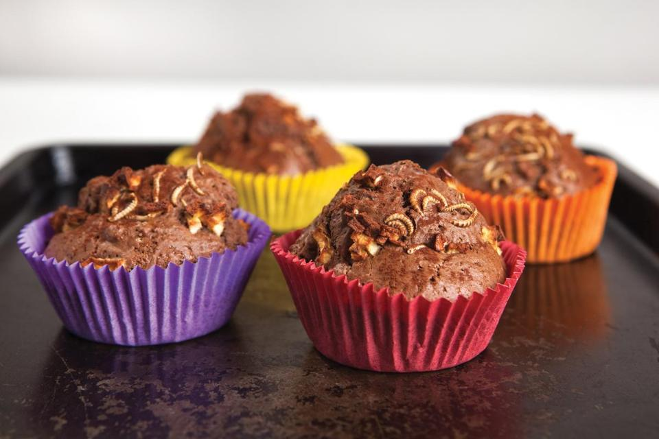 Chocolate cupcakes made with buffalo worms.