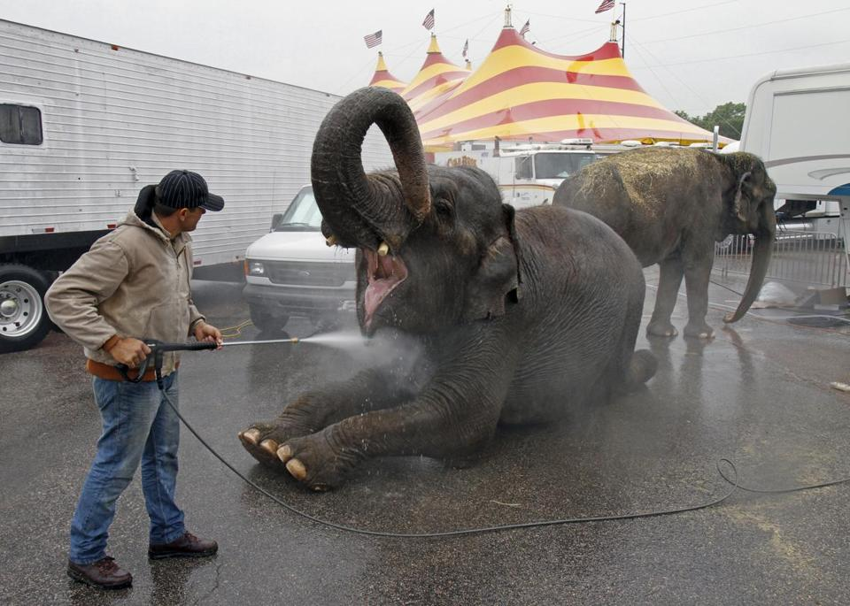 Elephant trainer John Walker III washed down elephants Viola (center) and Nina before a 2011 Cole Bros. Circus show in Raleigh, N.C.