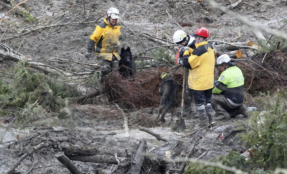 Workers using rescue dogs probed the debris Sunday for victims of a mudslide.