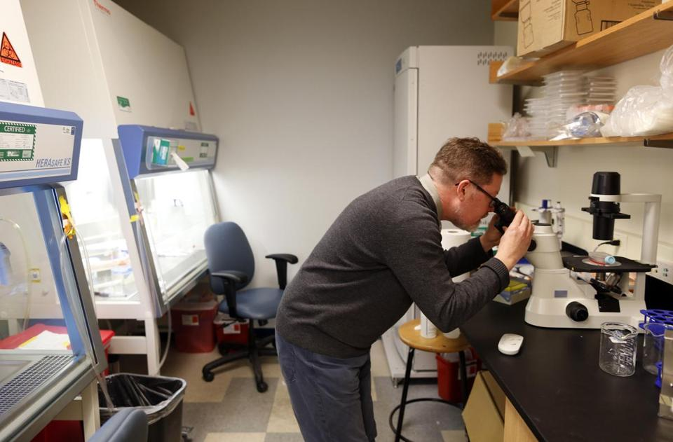 Tom Webster, a chemical engineer at Northeastern, examined bone cancer cells at a school research center.