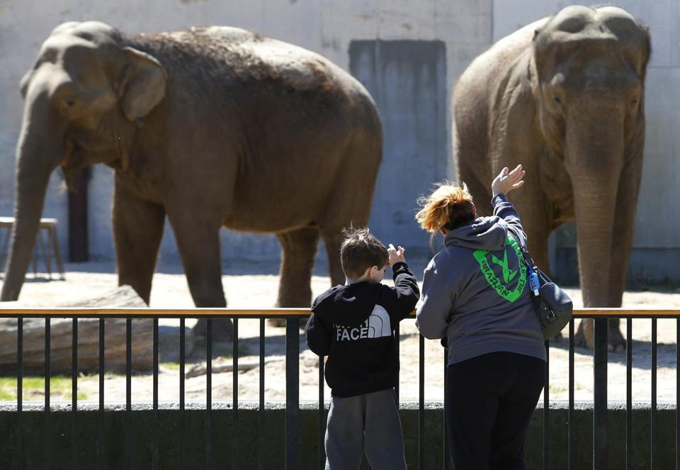 Kelly Carvalho and her son, Owen, waved at Ruth and Emily, longtime residents of the Buttonwood Park Zoo in New Bedford. Some advocates want to relocate the aging elephants.