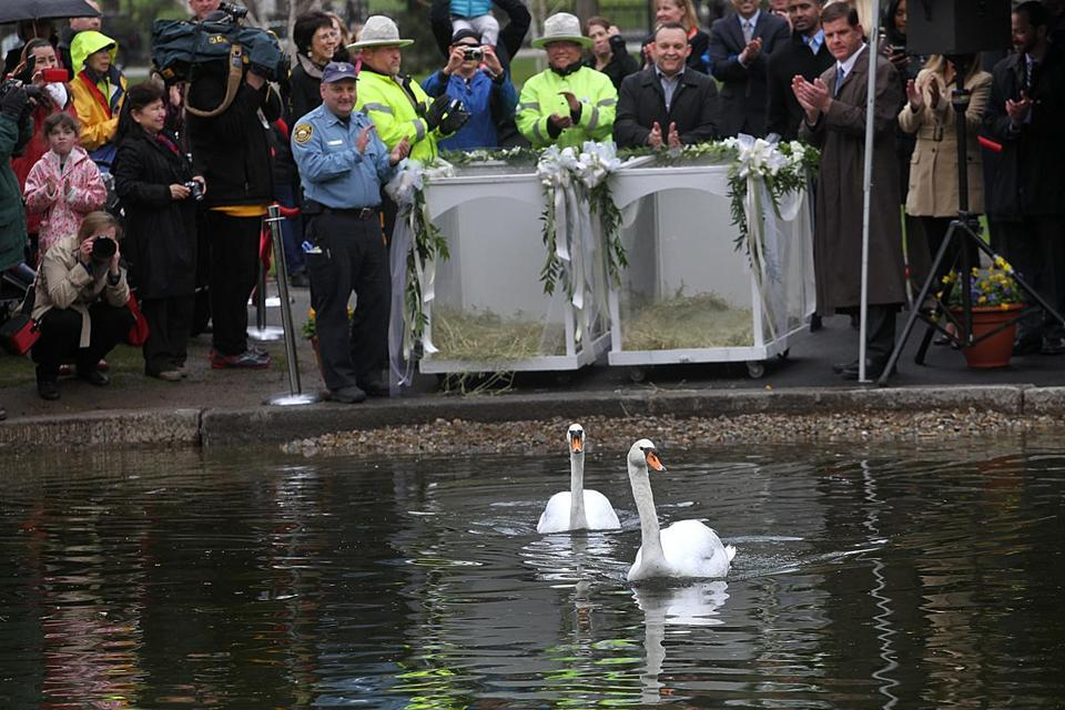 It was the 26th Annual Return of the Swans celebration at the Public Garden.