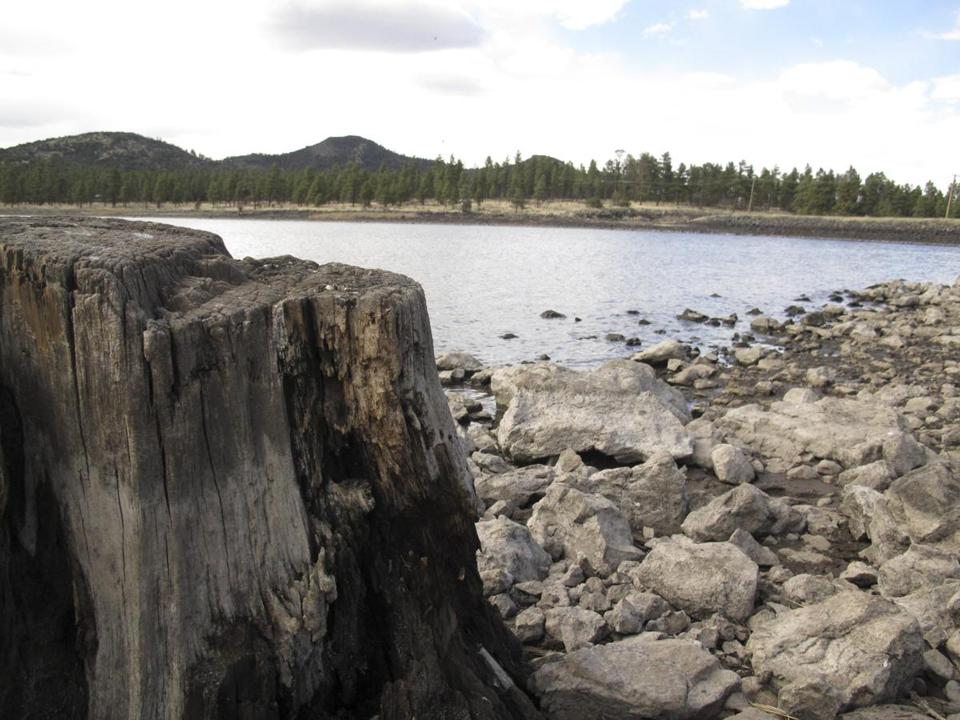 Tree stumps visible in an Arizona lake bed revealed low water levels, triggering a declaration of a water crisis.
