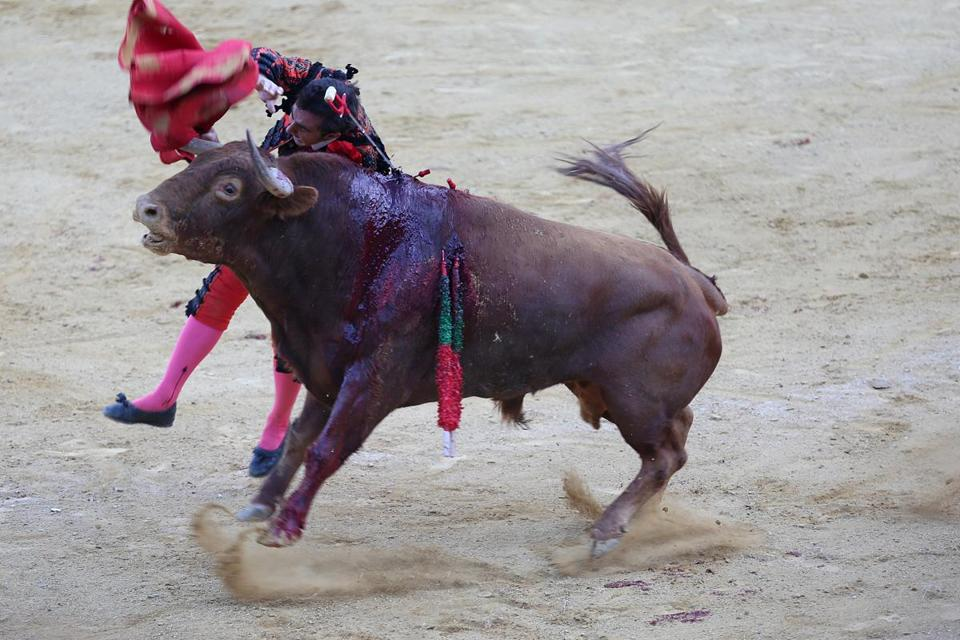 "The final kill: Matador El Fandi plunges the estoque, or steel sword, into the bull during the final part of the fight. This act is called the ""estocada."". It is a show of skill if the matador can pierce the heart on his first thrust and bring the bull to his knees. El Fandi did not accomplish his kill on the first strike. He did on the second."