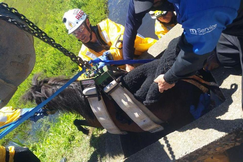 "The firefighters who jumped in to save the horse ""were at least to chest level"" inside the bog."