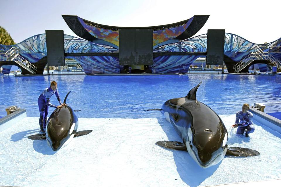 SeaWorld trainers Ryan Faulkner and Michelle Shoemaker worked with Melia and Kayla on a routine at the park in April.