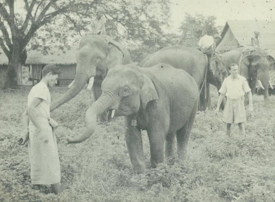 "J.H. ""Billy"" Williams was fascinated by the subtlety and strength of elephants' complex social bonds."