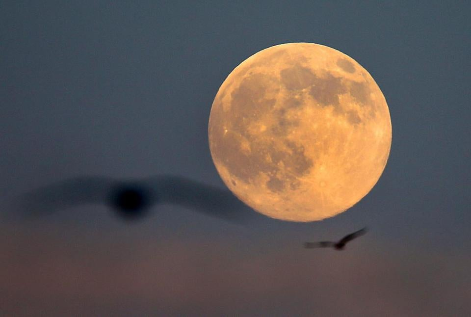 Seagulls flew above Plymouth Harbor as the moon rose Friday.