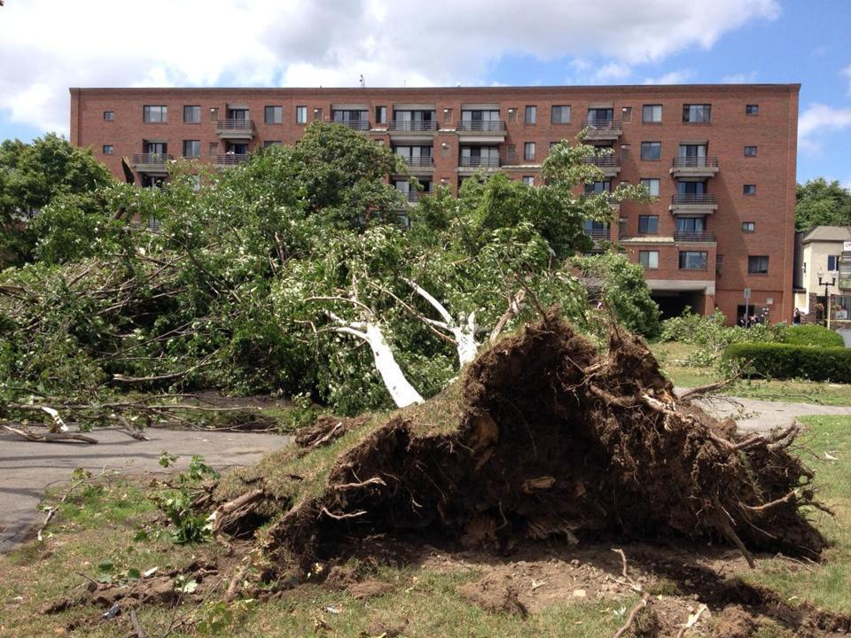 Many trees were down in Revere after powerful thunderstorms that also brought a tornado.