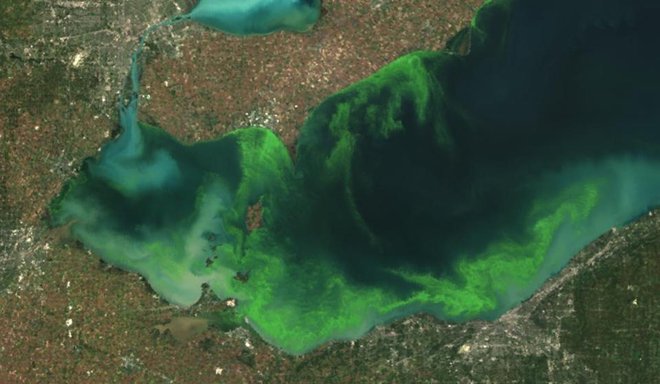 This satellite image provided shows the algae bloom on Lake Erie in 2011, which was the worst in decades, according to NOAA.
