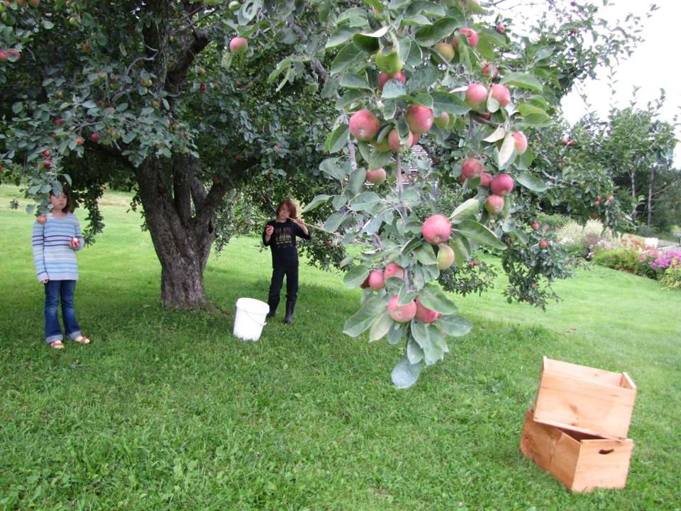 You can pick your own apples and sample cider at Bear Swamp Orchard & Cidery in Ashfield, Mass.