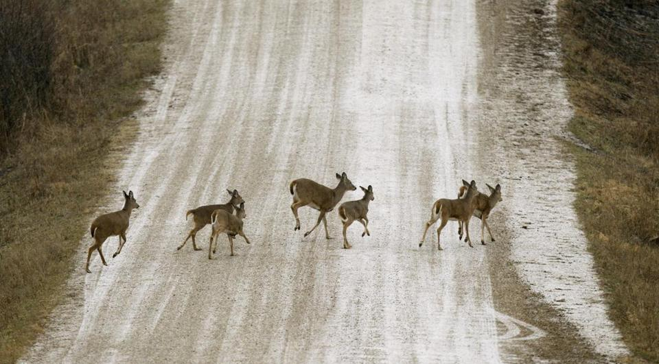 From 1990 to 2013, there were 1,088 collisions between planes and deer, elk, moose, and caribou, according to a report by the FAA and the Agriculture Department.