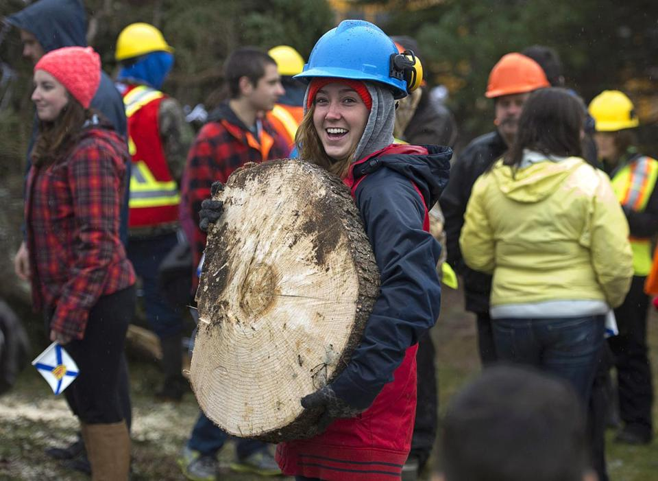 Kaitlyn Cann, a student at Nova Scotia Community College, held a slice of a 43-foot-high white spruce that was cut down Monday to be shippd south from Antigonish, Nova Scotia, to Boston.