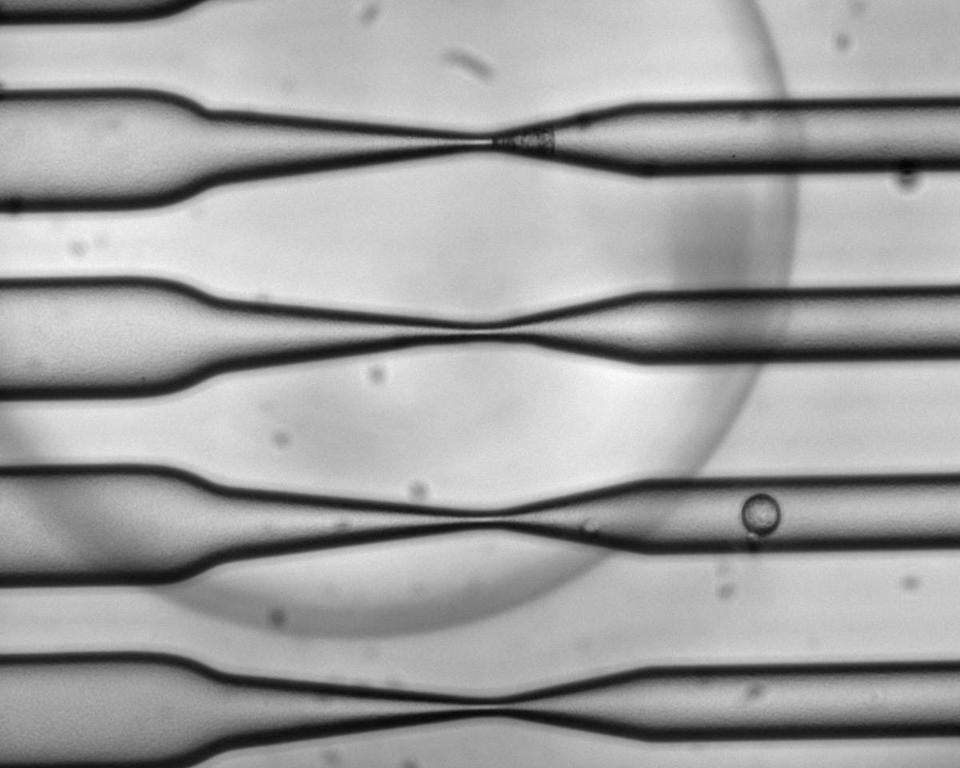 The narrow channels in a CellSqueeze chip can compress a million cells per second.