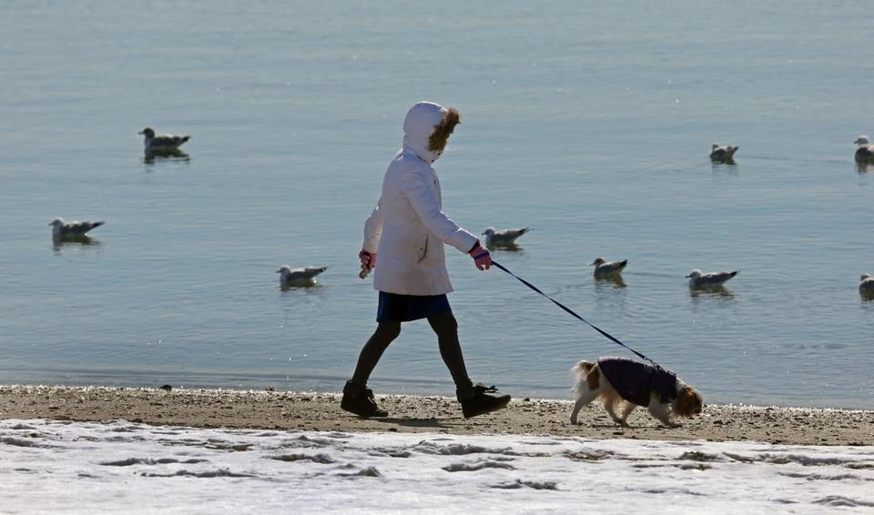 Snow was lingering for this person and her dog Monday at Carson Beach in Boston.