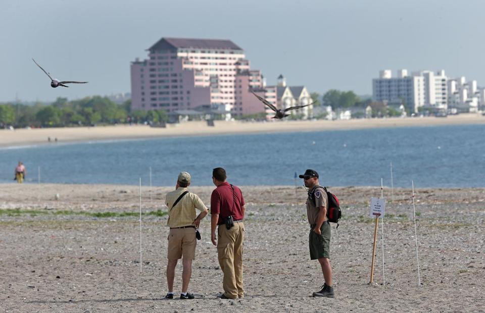 Environmental specialists (from left) Jon Regosin, Jorge Ayub, and Sean Riley checked on hatchlings at Revere Beach.