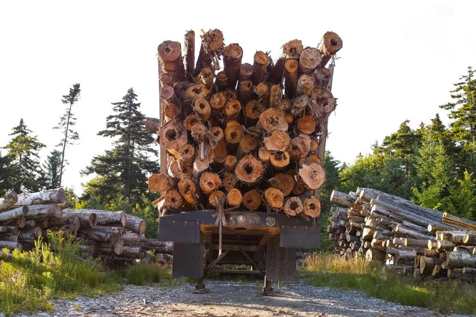 "Among the things you'll see up in Maine's ""unorganized territory"": logs."