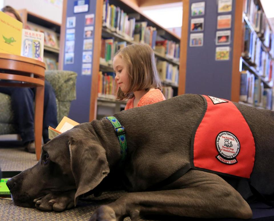 With Dash the Great Dane by her side, Madelyn Everett reads a story in the children's section at the Hingham Public Library.