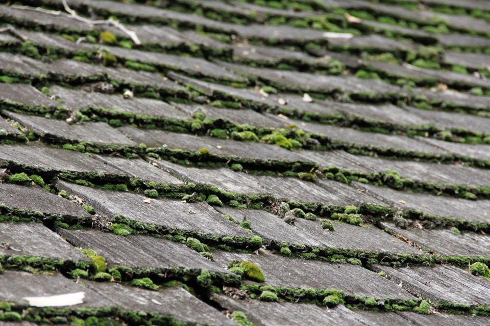 There are companies out there that will clean and kill roof algae safely without a pressure washer.