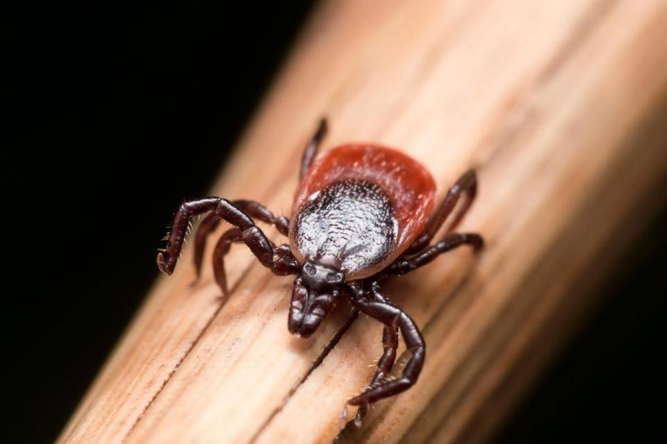 Many variables affect tick population size, but even one tick still poses risks.
