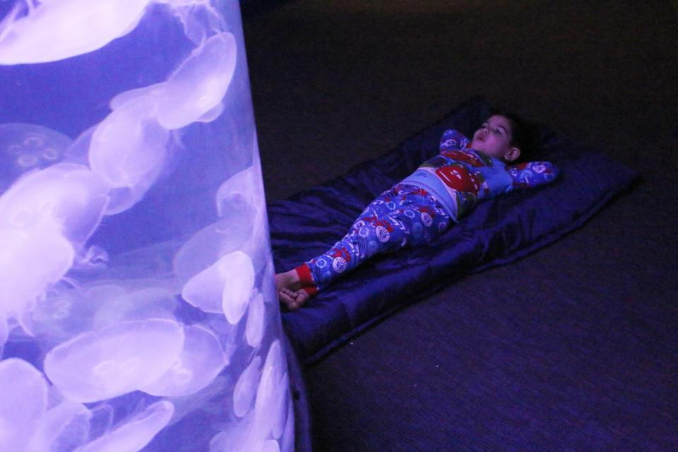 Settle down amid the ambient glow of moon jellyfish at the Maritime Aquarium in Norwalk, Conn.