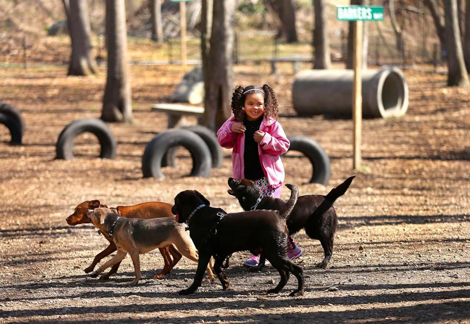 Randolph used Community Preservation Act money to build this dog park. Lillyana Henri, 6, of East Bridgewater is surrounded by dogs when she brought hers to the park with her mother. Boston Globe staff photo by John Tlumacki