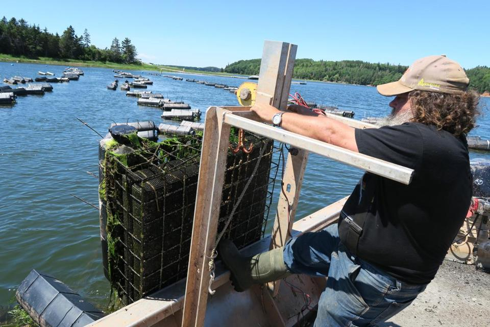 George Dowdle farms Green Gables oysters on Southwest River of Prince Edward Island.