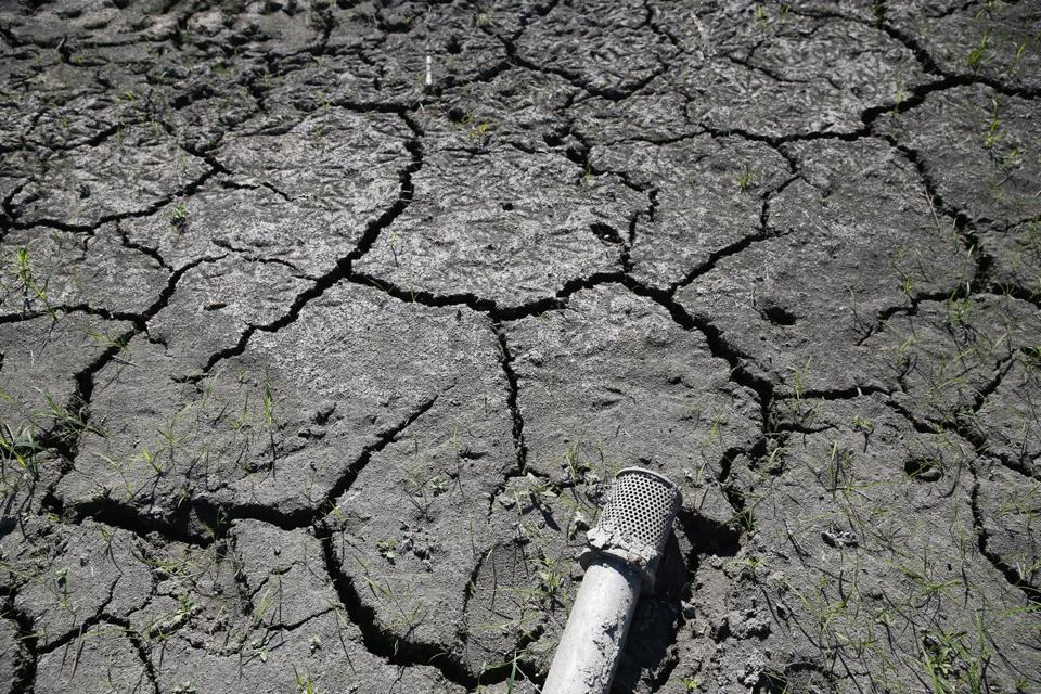 Sudbury, MA - 7/26/2016 - Cracked earth surrounds a hose in a dried up pond that is usually used to irrigate crops at Siena Farms in Sudbury, MA, July 26, 2016. (Jessica Rinaldi/Globe Staff) Topic: 29farmers