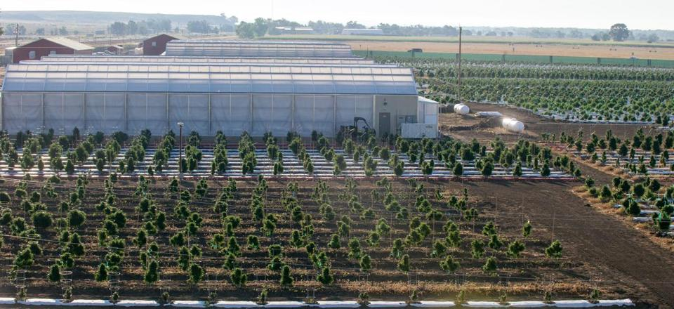 Los Sueos Farms is one of several marijuana-growing facilities that have sprung up in Pueblo County since legalization was approved statewide in Colorado in 2012.