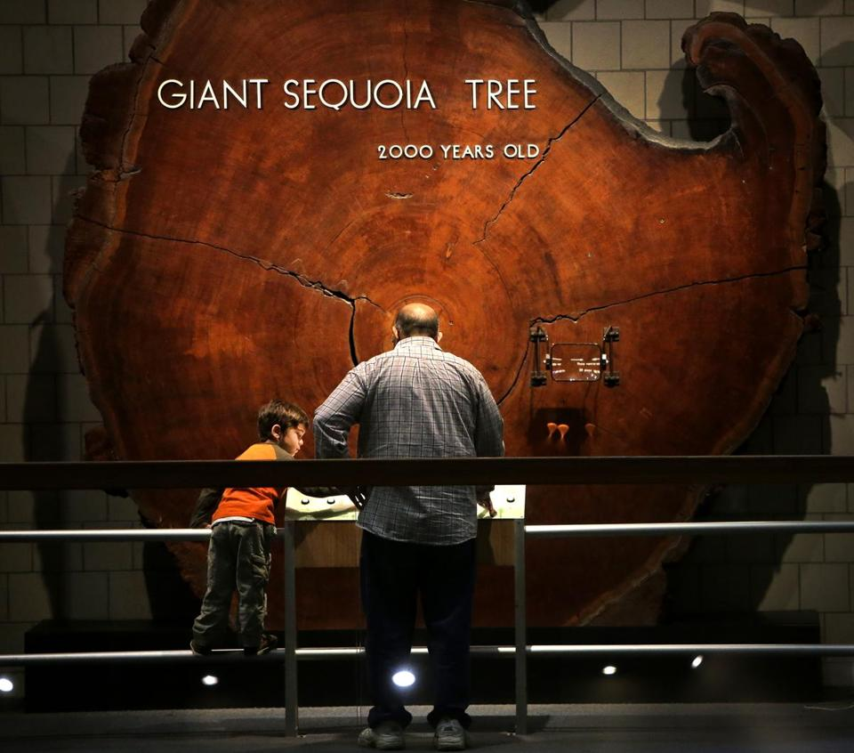 John Afendoulis of Newport, R.I., viewed the sequoia cross-section with son Auxentios, 4. The exhibit was a favorite of Bloomberg when he was growing up in Medford.