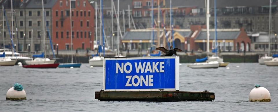 BOSTON, MA - 6/03/2016: A sign posted floating in Boston Harbor saying NO WAKE ZONE makes a good perch for this bird. (David L Ryan/Globe Staff Photo) SECTION: METRO TOPIC stand alone photo