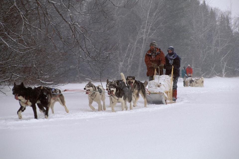 Mahoosuc Guide Service offers dogsledding trips in the northwoods of Maine.