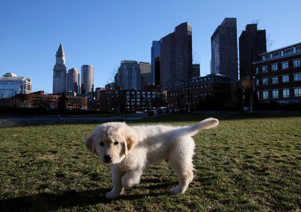 Matt Dubois exercised his puppy, Bruin, on the Rose Fitzgerald Kennedy Greenway on Thursday.