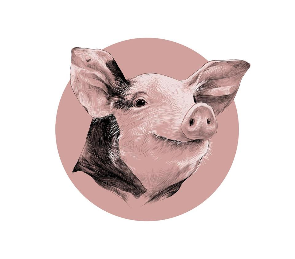 head of spotted pig, sketch vector graphics black and white pattern on a background of pink circle