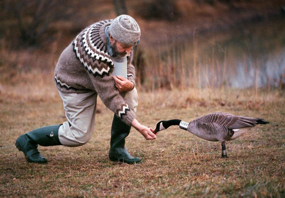 "Dr. Sladen fed Sur le Toit, star of ""Fly Away Home,"" on which Dr. Sladen served as a technical adviser."