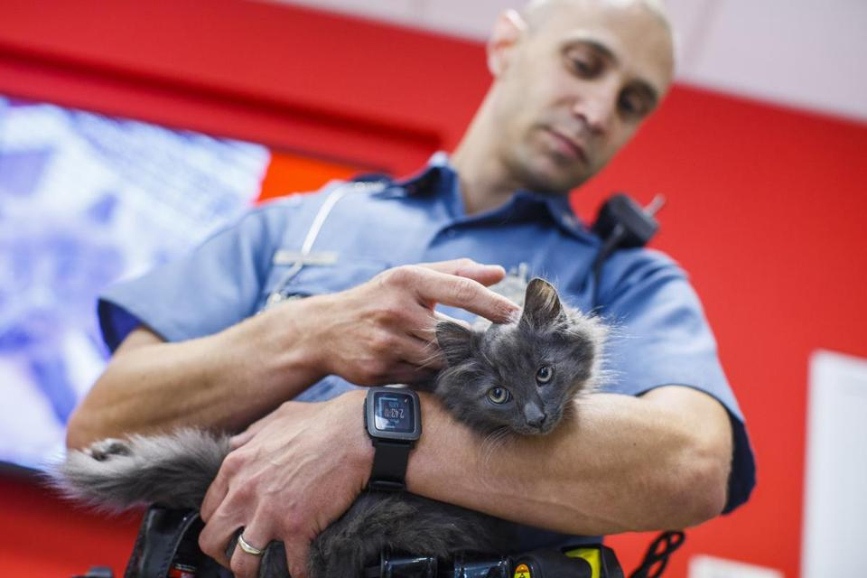 Massachusetts State Trooper John DeNapoli held a long-haired house cat he rescued from the median on Interstate 93.
