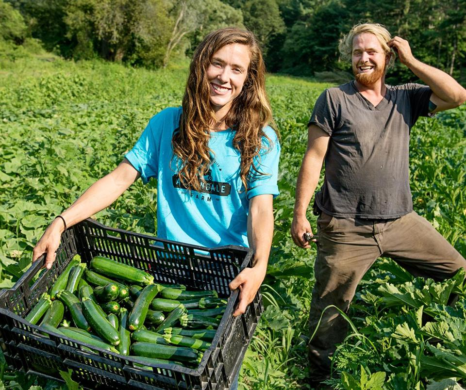 Lead farmers Steph Moran (left) and Will Morningstar with a tiny portion of the bountiful zucchini crop from the fields at Allandale Farm.