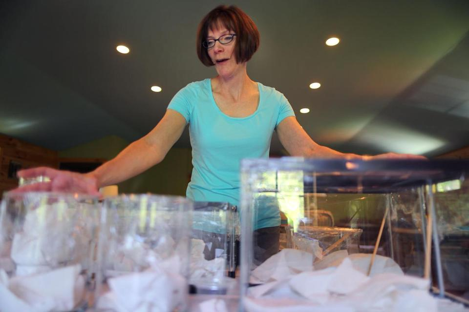Christine Helie raised 200 baby praying mantises that she found in egg sacks in April.