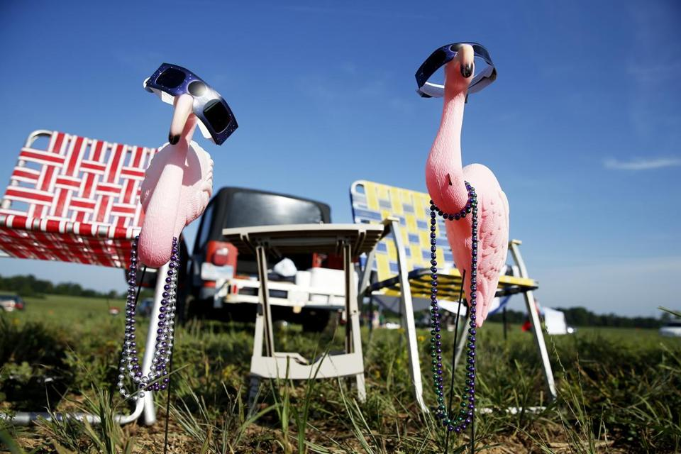 Plastic flamingos named Fred and Matilda were adorned before the solar show