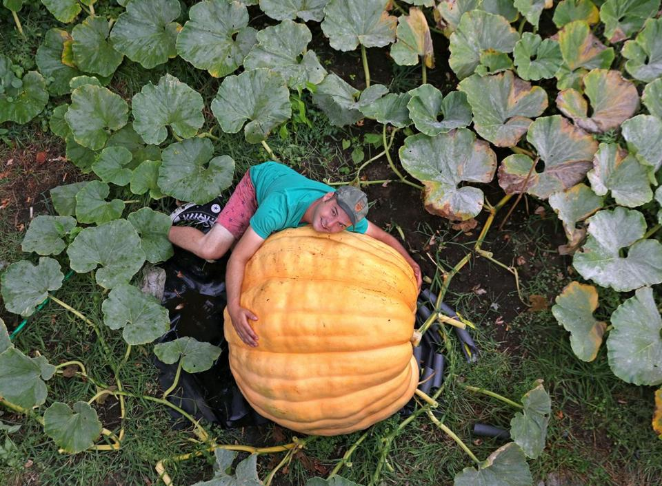 "Revere resident Christian Ilsley has been carefully tending to the gargantuan ""Atlantic Giant"" pumpkin, for which he has big ambitions."