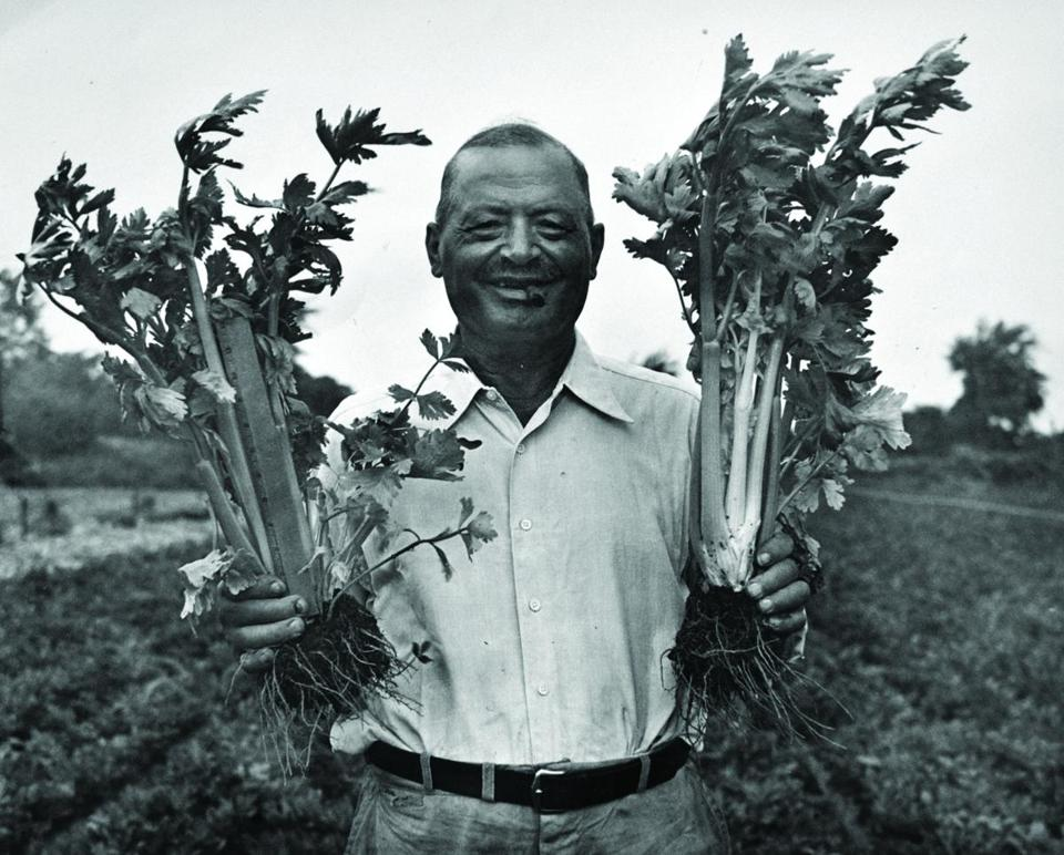 Peter Volante, founder of Volante Farms, holds stalks of celery in the 1930s.