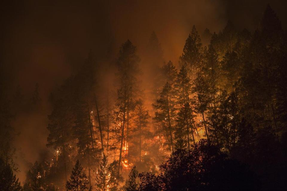 A wildfire ravaged through a forest west of Napa, Calif., last week.