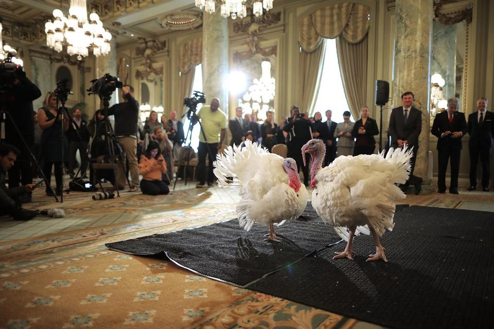 Turkeys that will be pardoned by Trump check in to Willard Hotel