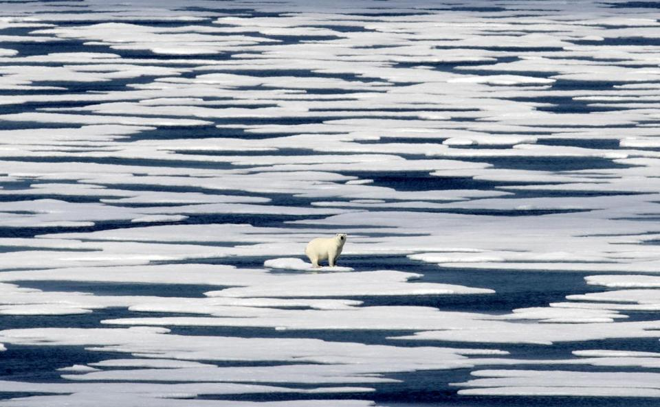 A polar bear on a patch of ice in the Franklin Strait in the Canadian Arctic Archipelago.