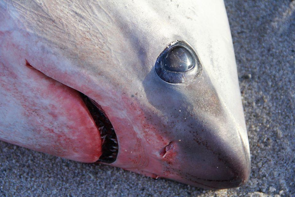 Sharks freezing solid following cold snap in US