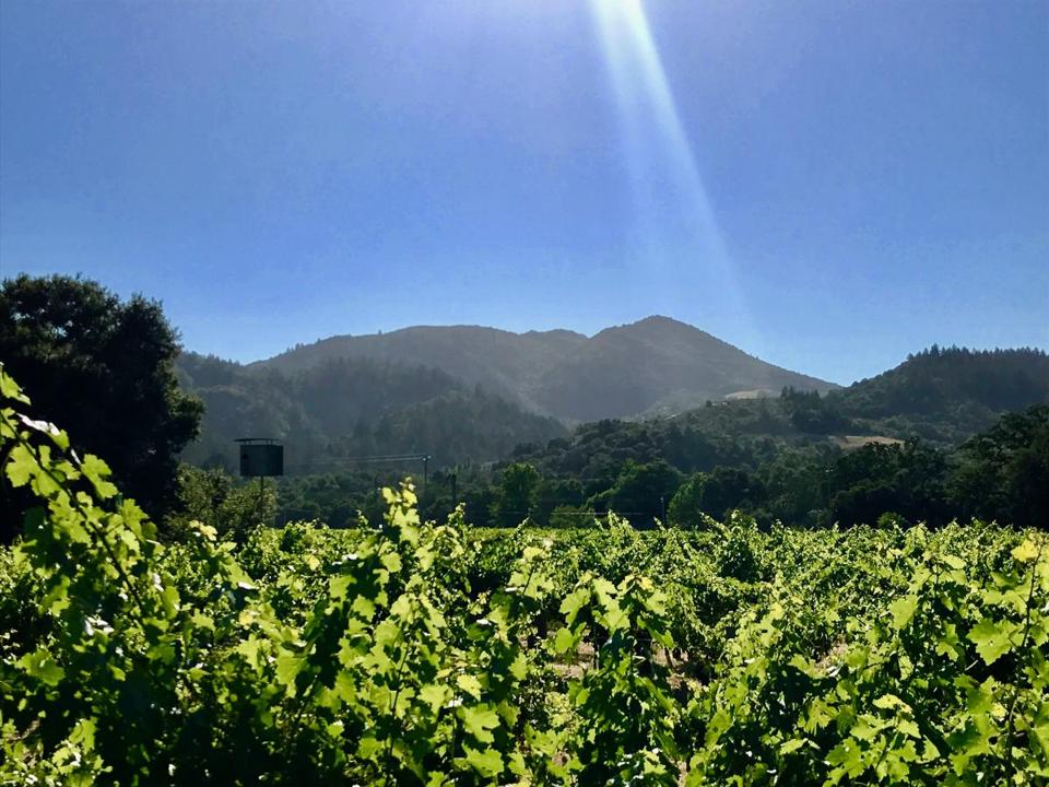 The sun shines brightly over vineyards in Napa Valley, California